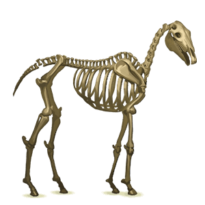 riding unicorn skeleton