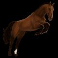 horse paint horse chestnut overo