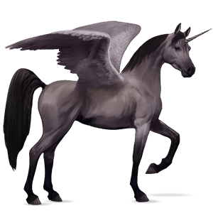 winged riding unicorn arabian horse black