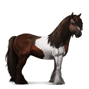 riding horse gypsy vanner flaxen liver chestnut