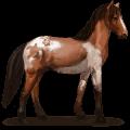 wild horse abaco barb