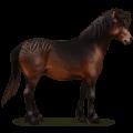 wild horse dartmoor