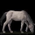 wild horse dülmen pony