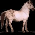 wild horse konik