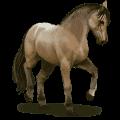 wild horse lavradeiro