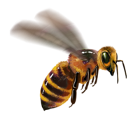 compagnon-abeille.png