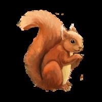 compagnon-ecureuil.png