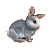 compagnon-lapin.png