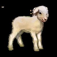 compagnon-mouton.png