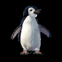 compagnon-pingouin.png