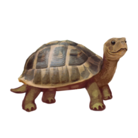 compagnon-tortue.png