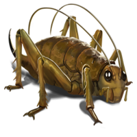 compagnon-weta.png