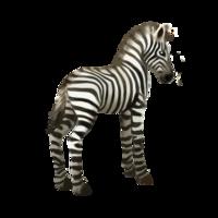 compagnon-zebre.png