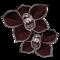 https://www.howrse.com/media/equideo/image/produits/60/orchidee-noire.png?zerjkgzey&zerjkgzey
